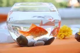 Nieuw thema : Blub ik ben een visje.